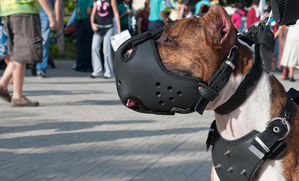 намордник за кучета