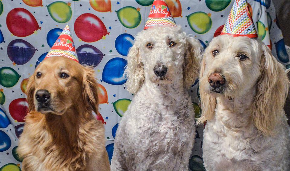ветеринарна клиника годишнина