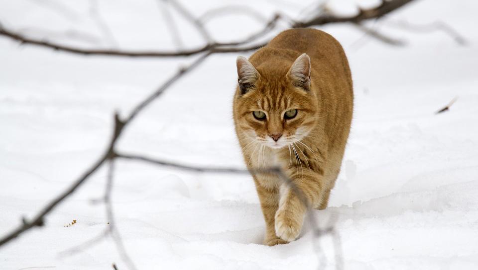 цистит при котки